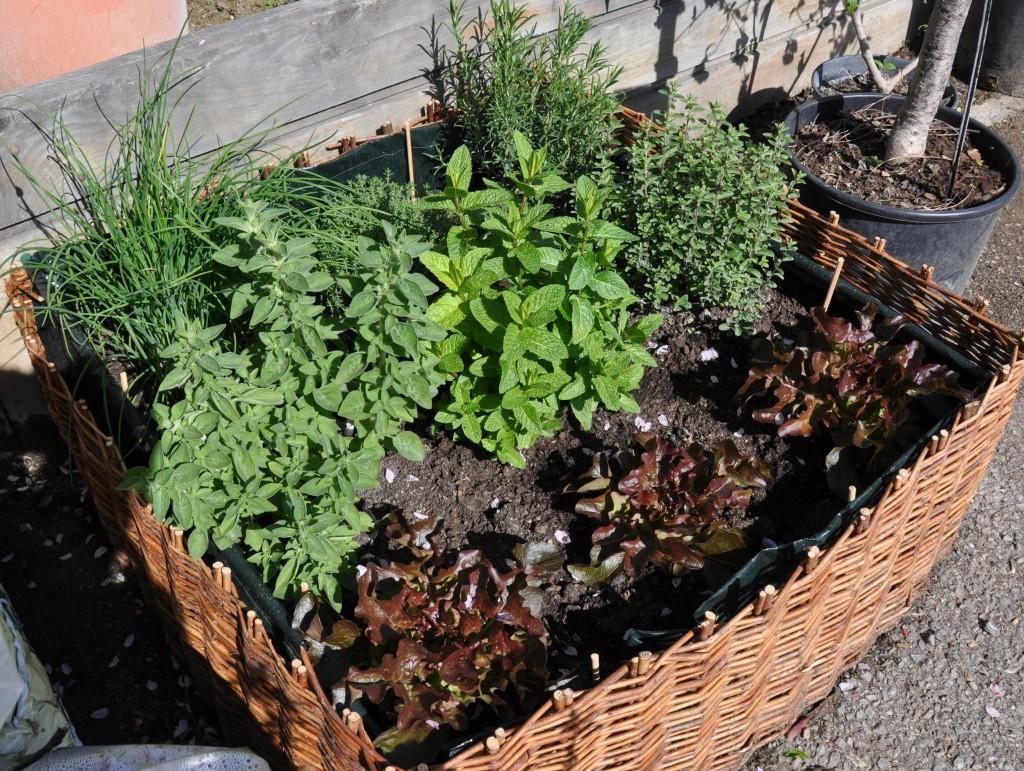 Plantes Aromatiques En Jardinière une jardinière de confort - jardiner avec jean-paul