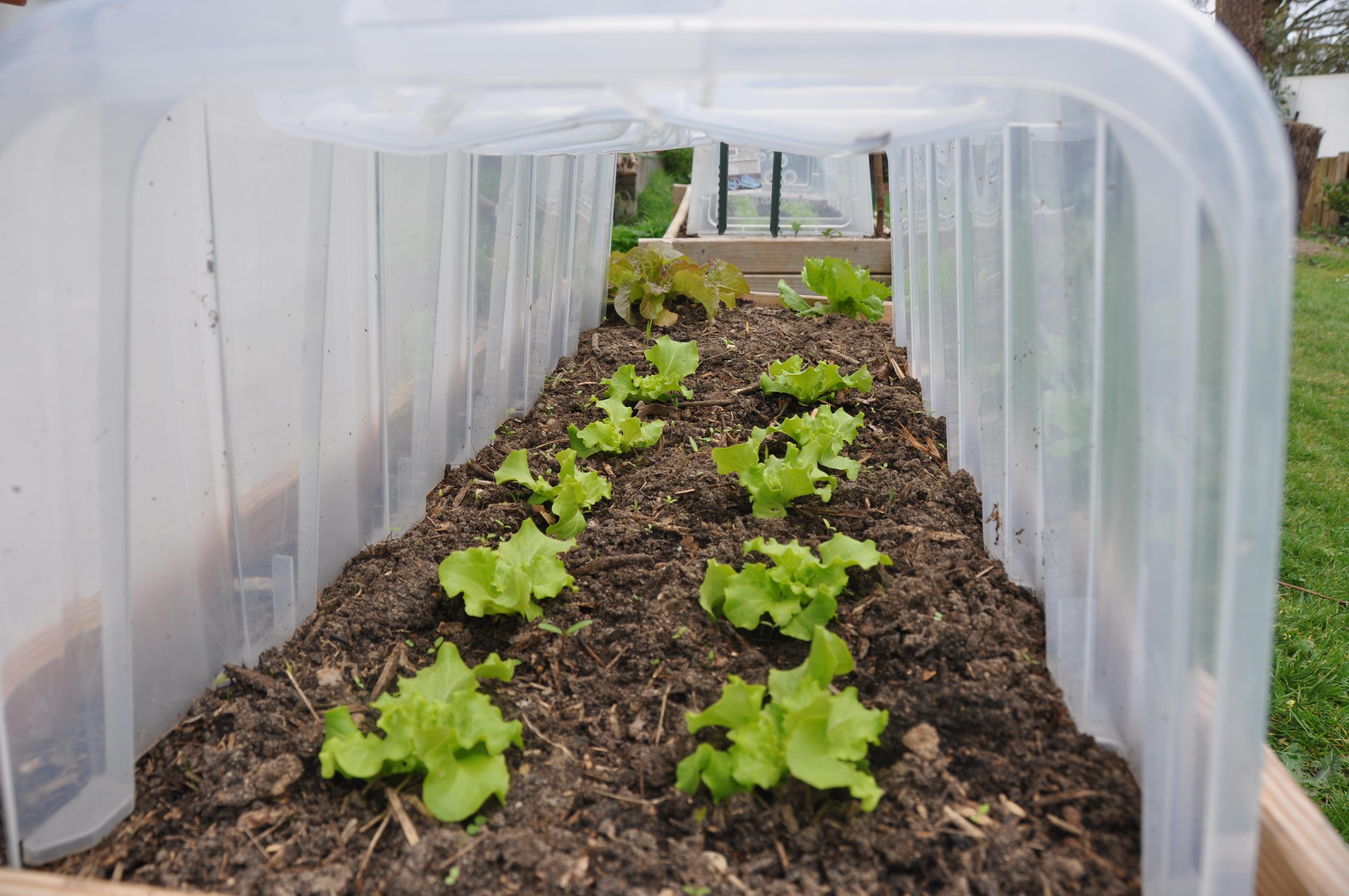 Que Planter En Octobre Sous Serre pourquoi semer sous serre ou sous abri ? - jardiner avec