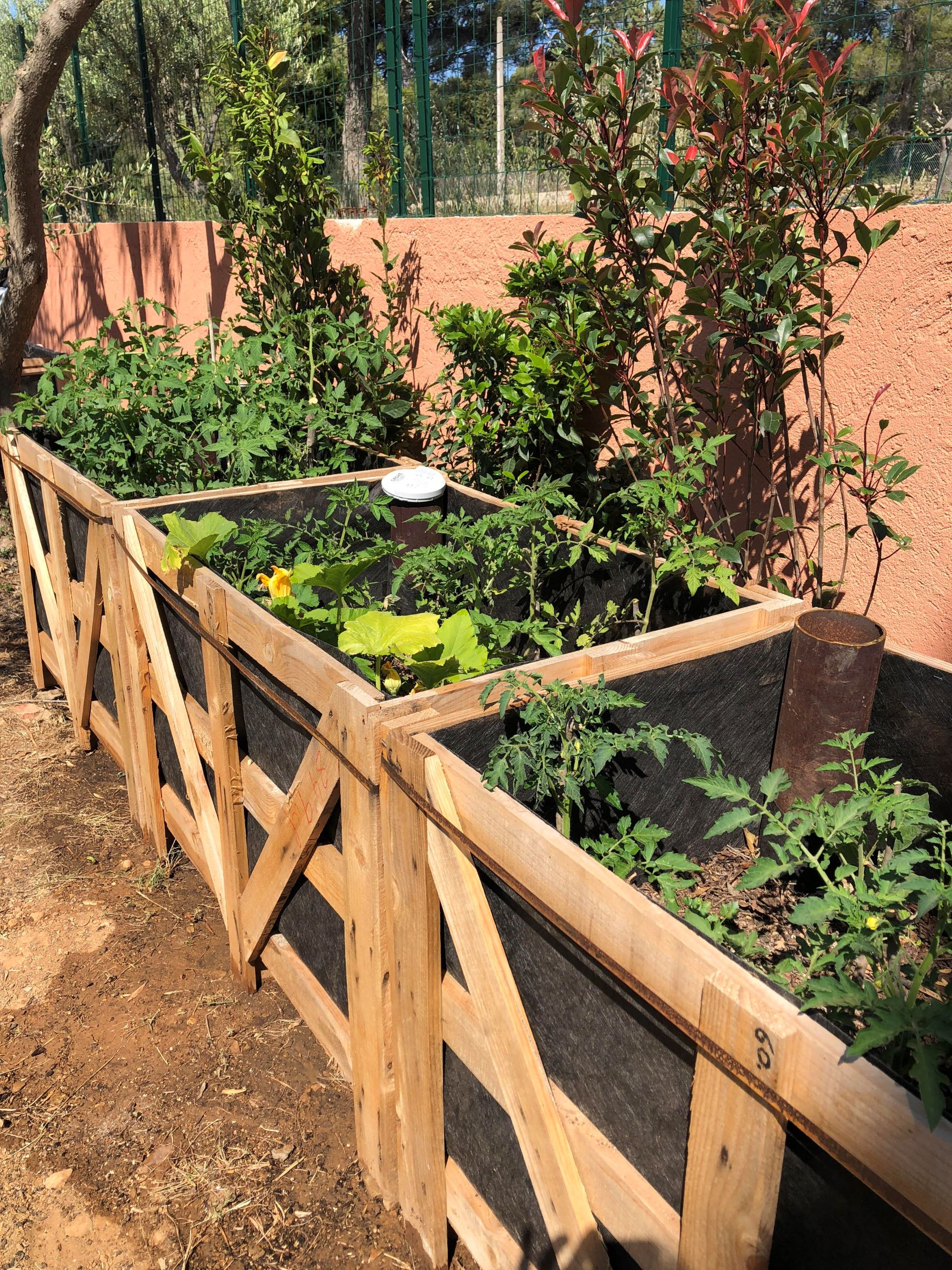 Legumes A Mettre Dans Le Jardin comment faire face devant le prochain épisode de sécheresse