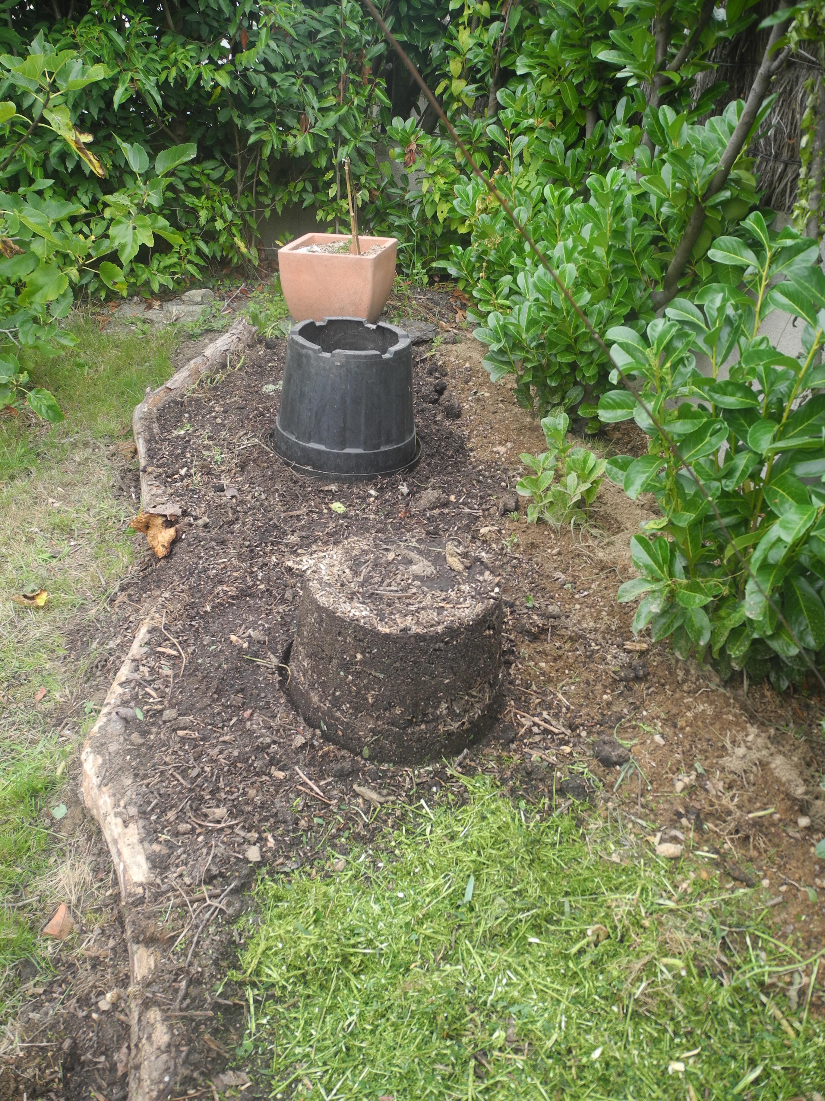 Comment Planter Un Arbre Fruitier planter des framboisiers - jardiner avec jean-paul
