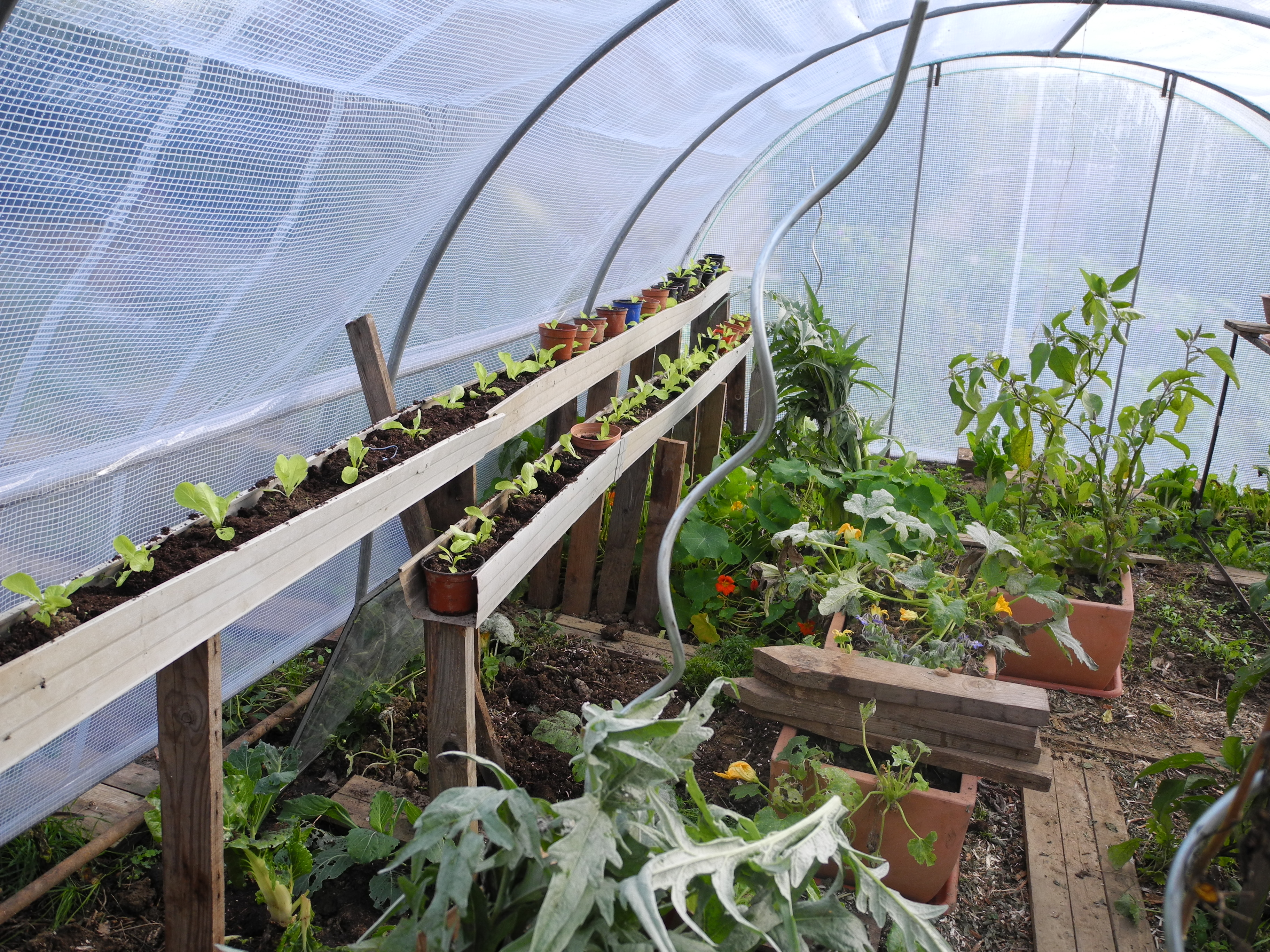 Que Planter En Octobre Sous Serre 5 activités au jardin pour ce mois d'avril 2020 - jardiner
