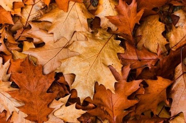 les feuilles mortes un tr sor sous nos pieds jardiner avec jean paul. Black Bedroom Furniture Sets. Home Design Ideas