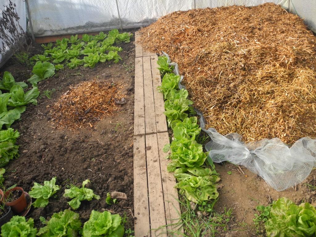 Le Jardin Potager En Janvier sept activités pour le jardinier en ce mois de janvier 2016