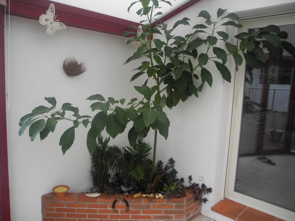 Plante D Intérieur Qui Aime La Chaleur une véranda, un bon refuge pour vos plantes